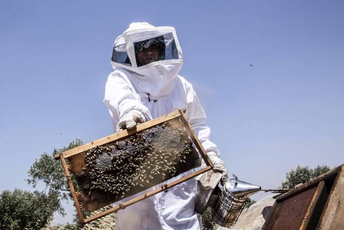 Aicha, una delle partecipanti al viaggio di studio, si prende cura delle sue api in Siria. ©FAO/Jafar Almerei