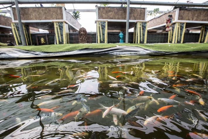 Pesci in una vasca della farm acquaponica The Circle di Monte Porzio Catone, Roma - Photo: ©FAO/Riccardo De Luca / FAO