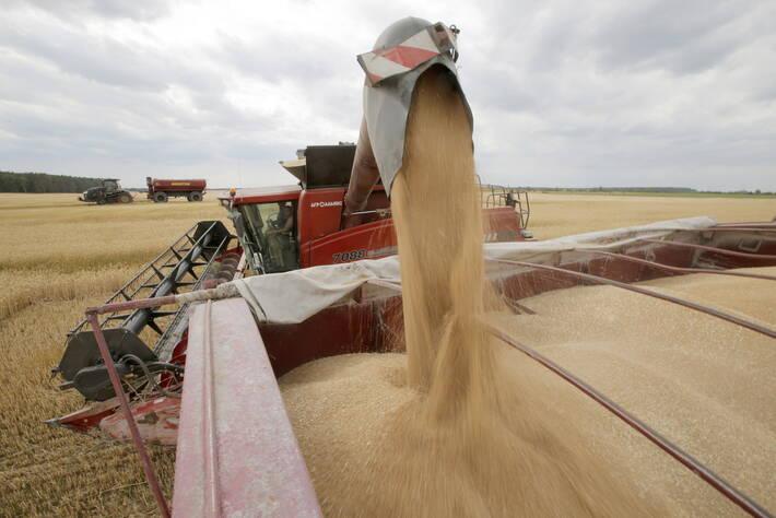 Raccolta del grano, Krasne, Ucraina - foto FAO